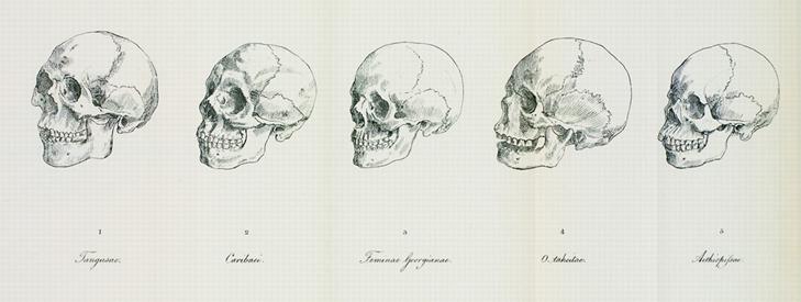 skullssmaller
